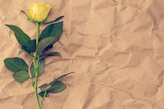 Yellow rose on crumpled paper background Royalty Free Stock Photo