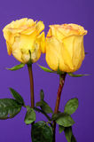 Yellow Rose Floral arrangement Stock Images