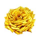 Yellow Rose Flower Royalty Free Stock Photo