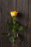 Yellow rose flower on a wooden background. Stock Images