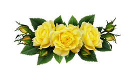 Yellow rose flowers arrangement Royalty Free Stock Image