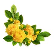 Free Yellow Rose Flowers In A Corner Arrangement Royalty Free Stock Image - 178099506