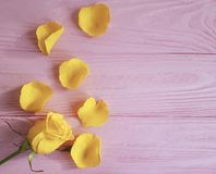 Yellow freshness greeting rose on a pink wooden background, frame. Yellow rose freshness on a pink wooden background frame greeting royalty free stock photography