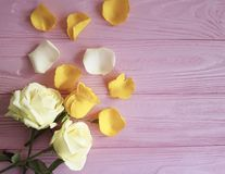 Yellow freshness rose on a pink wooden background, frame. Yellow rose freshness on a pink wooden background frame Stock Photos