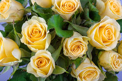 Yellow rose with green background Stock Image