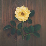Pretty Vintage Yellow Rose On Timber Table Stock Photos