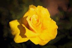 Yellow rose impression Stock Photos