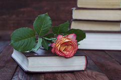 Yellow rose lays on the book Stock Photo