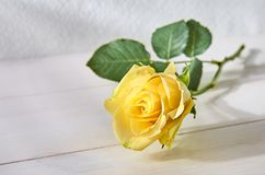 Yellow rose on a light background of boards stock photos