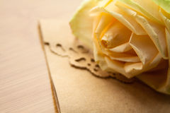 Yellow rose Royalty Free Stock Images