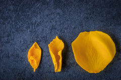 Yellow rose petal on the blue background top view Royalty Free Stock Photos