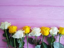Yellow rose on pink wooden place for tex. Yellow rose on pink wooden, place for tex Stock Image
