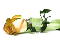 Yellow rose with ribbon Stock Photos