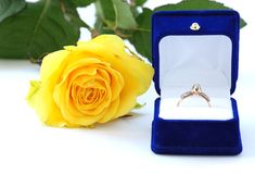Yellow rose with ring Stock Photos
