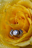 Yellow rose with ring Royalty Free Stock Image