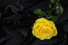 Yellow rose on a rumpled black velvet Royalty Free Stock Photos