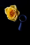 Yellow rose in silver vase Stock Photos