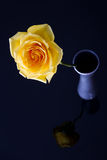 Yellow rose in silver vase Stock Photo