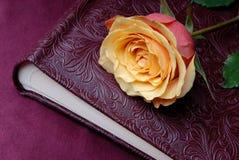 Yellow rose. Valentines Day, wedding day background Stock Image