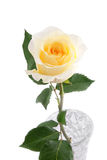 Yellow rose in vase Stock Photo