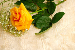 A yellow rose and vintage silk background royalty free stock photo