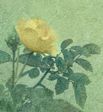 Yellow Rose Vintage Style Photo. Beautiful color manipulated yellow rose and plants in vintage grunge style texture background Stock Photos