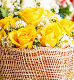 Yellow rose with water drops. Stock Photos