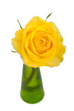 Yellow rose on white Stock Image