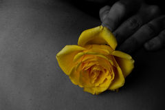 Yellow rose on woman Royalty Free Stock Photography