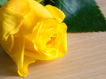 Yellow rose on wooden table. Beautiful yellow roses on wooden table Royalty Free Stock Image