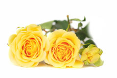 Yellow roses. Bunch of yellow roses  isolated on the white bachground Stock Photography
