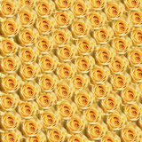 Yellow Roses. Multiple yellow roses background Stock Photos