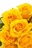 Yellow roses. Bunch of yellow roses isolated on white background Royalty Free Stock Photos