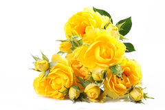 Yellow Roses Royalty Free Stock Photography
