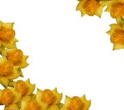 Yellow roses Royalty Free Stock Photos