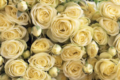 Yellow roses. Background from set of yellow roses Royalty Free Stock Photography