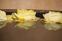 Yellow roses. Royalty Free Stock Image