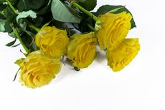 Yellow roses. Five yellow roses on white Stock Images