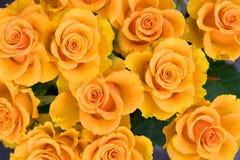 Yellow roses. Beautiful yellow roses holiday background Stock Photo