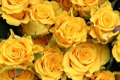 Free Yellow Roses Royalty Free Stock Photography - 691377