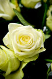 Yellow roses. Bloom in a bouquet of yellow roses Royalty Free Stock Photos