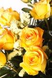 Yellow roses. On the white Royalty Free Stock Photos