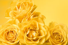 Yellow roses background. Bunch of pastel yellow roses, yellow background Stock Photo