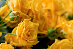 Yellow roses. Beautiful flowers in the bouquet Royalty Free Stock Images