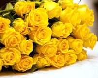 Yellow roses. Beautiful yellow roses for gift Stock Photos