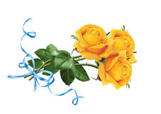 Yellow roses with the blue ribbon Stock Photography