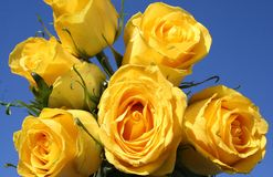 Yellow Roses - blue sky stock photography