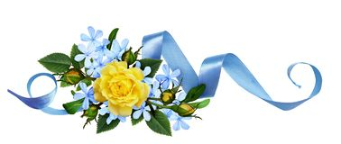 Yellow roses and blue small flowers with silk ribbon in a floral arrangement stock images