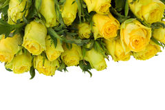 Yellow roses border Stock Photo