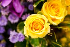 Yellow roses bouquet. Stock Photo